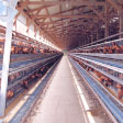常陸大宮市 緒川村養鶏組合の奥久慈卵